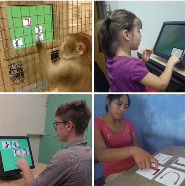 재귀적 반복 능력 실험에 참여한 4개의 그룹. 위 왼쪽부터 시계 방향으로 짧은꼬리 원숭이, 5세 이하 어린이, 볼리비아 원주민, 미국 성인.