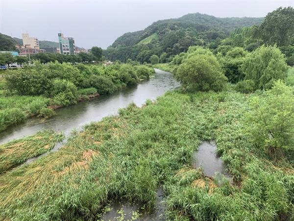 대전 유등천 전경