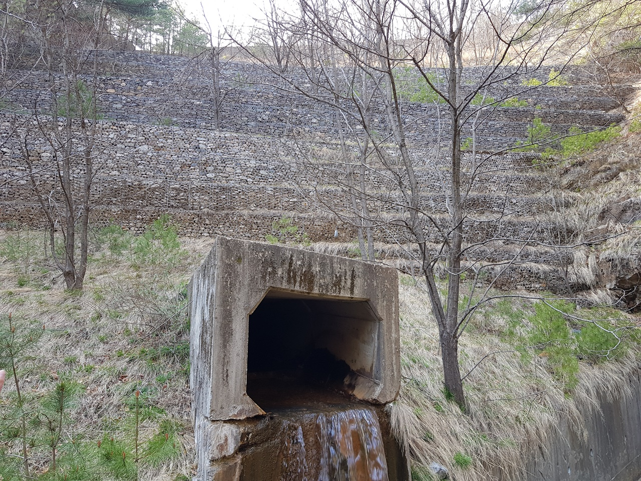 2019년 4월의 대현리 광미댐. 계곡 앞쪽에 돌망태 옹벽이 설치되어 있고 아래 배수관을 통해 침출수가 흘러나오고 있다.