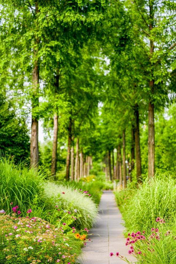 하늘을 향한 메타셰콰이어의 시원함 아래서 초록의 싱그러움을 맛본다. '숲멍'...