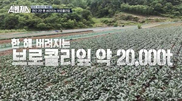 8일 방송된 tvN 예능 <식벤져스>의 한 장면