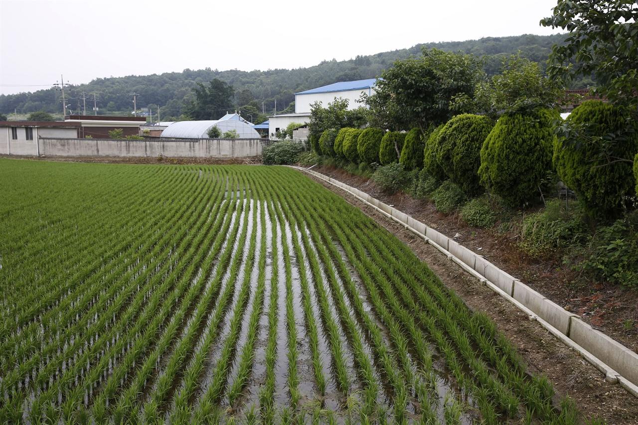매간당 고택이 자리하고 있는 영광 동간리 풍경. 1586년 연안 김씨 김인택이 옮겨와 살면서 마을이 형성됐다고 전해진다.