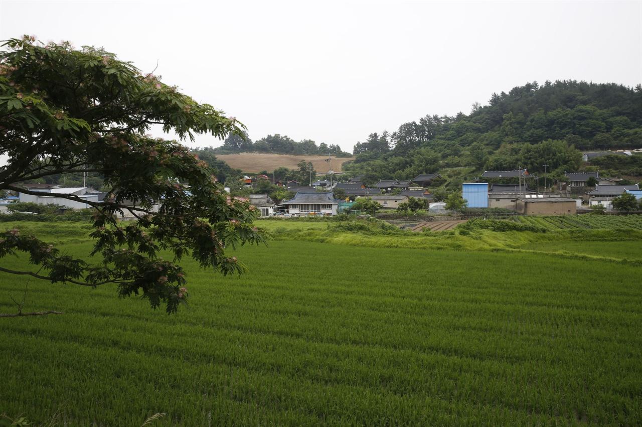 자귀나무와 어우러진 동간2구 전경. 푸르름을 더해가는 들녘과 마을이 조화를 이루고 있다.