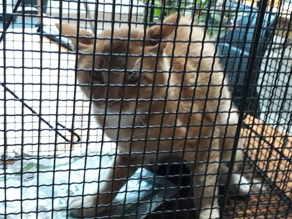 길고양이 미끼를 먹으려다 포획틀에 갇힌 길고양이.