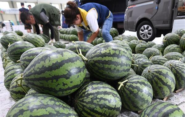7월 15일 거창원협 국농소 청과물종합처리장.