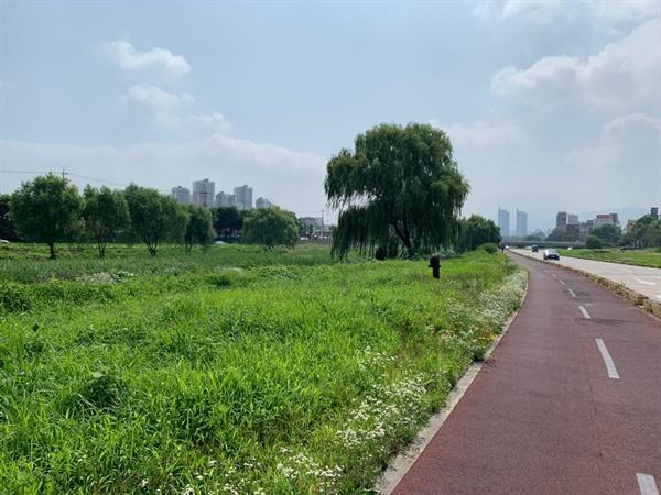 대전 3대 하천 중 대전천, 하상도로가 산책길과 맞닿아 있다.