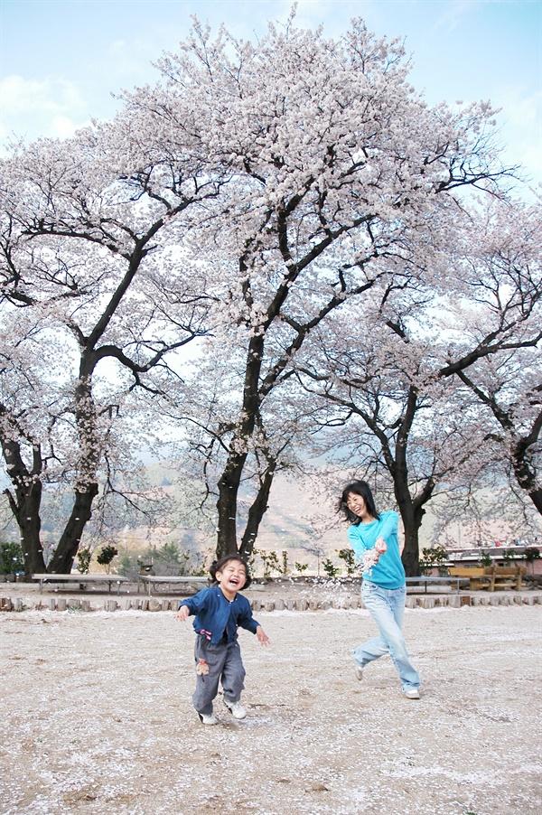 코로나19 바이러스가 세상을 침탈하기 이전 시절. 우리는 해마다 벚꽃 휘날리는 봄을 기다렸다. 그 봄이 올해는 사라졌다.
