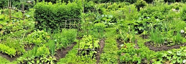 시민들이 가꾸는 라삔라흐띠의 커뮤니티 가든, 100여 종이 넘는 채소와 꽃들을 재배한다.