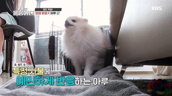 KBS 2TV <개는 훌륭하다>의 한 장면