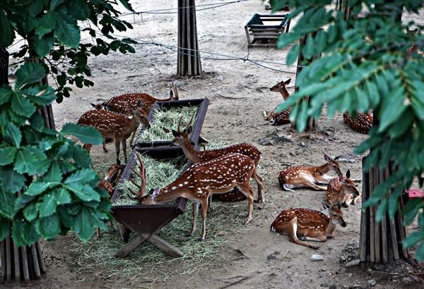 한강 자전거길에서 서울숲으로 가는 연결다리에서 바라본 사슴들