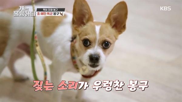 3일 방송된 KBS2 <개는 훌륭하다>의 한 장면