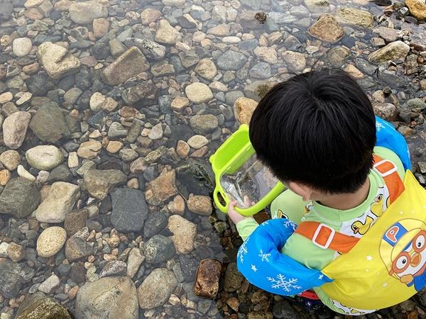 경주 동창천 상류에서 물고기를 잡아 다시 방류하며 즐거워하는  어린이 모습