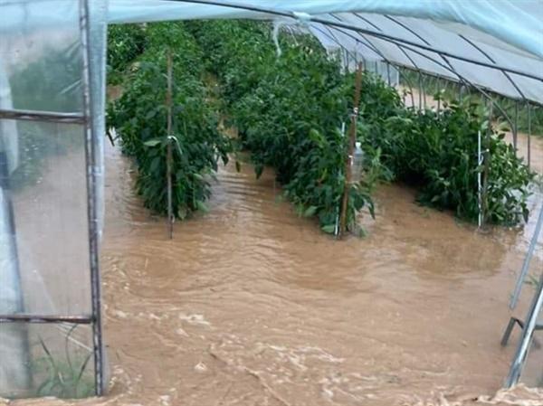 홍성군 금마면의 한 비닐하우스에 집중호우로 물이 가득 들어차 침수되는 등, 지난 3일 내린 폭우로 농경지와 도로, 주택, 상가 등이 피해를 입었다.