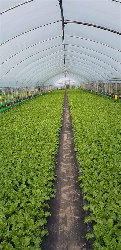 비닐하우스 재배 농작물 수해를 입기 전 이주노동자들이 일하던 현장이다.