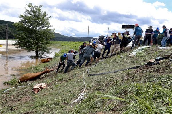 8월 9일 합천군 쌍책면 근태리 하천에서 물에 빠진 소를 주민들이 끌어 올리고 있다.