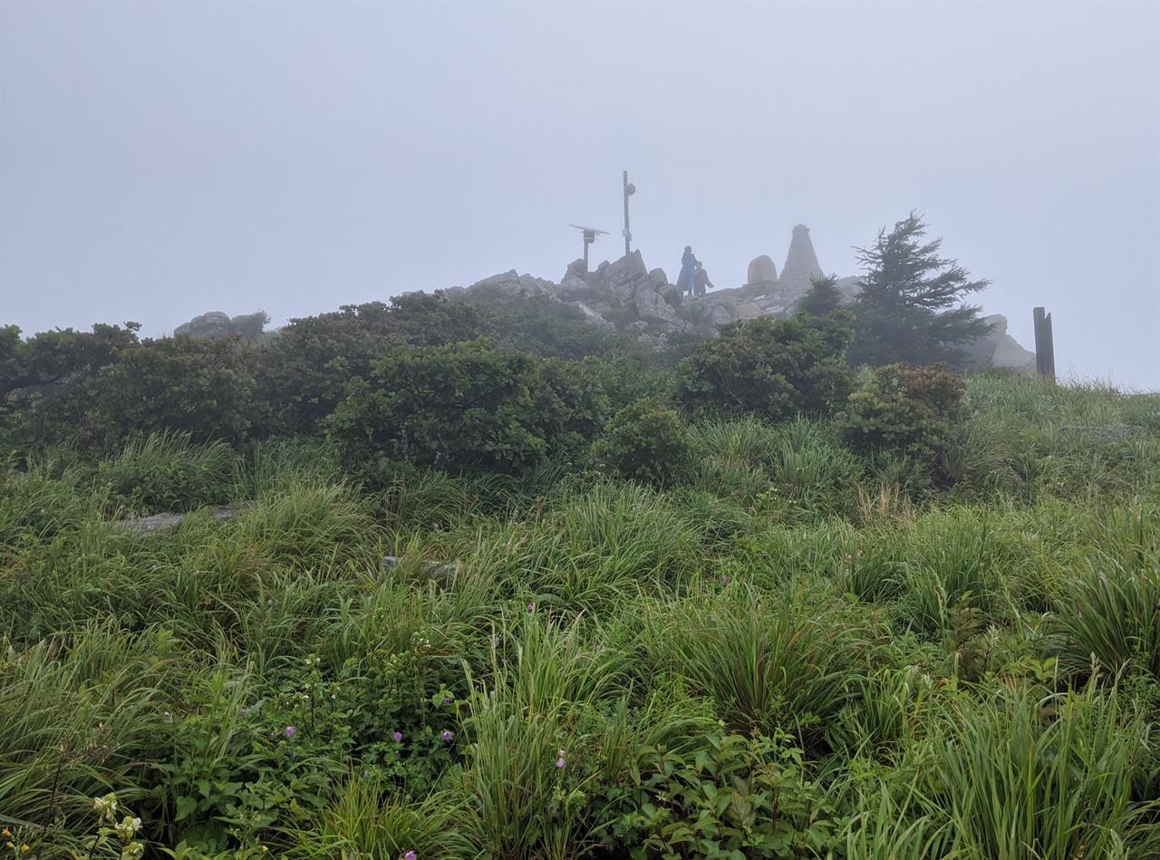 함백산 정상 멀리 함백산 정상에 세워진 표지석과 돌탑이 보이고 가까이는 녹색 풀 사이로 둥근이질풀이 고개를 내밀고 있다.