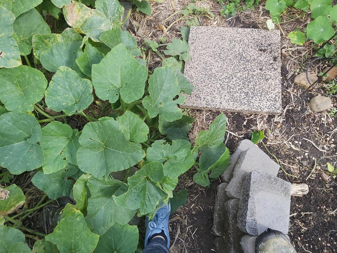 돌을 들면 통이 있고 그 통안에 음식물들을 모아 2-3개월 두면 이것들이 분해되기 시작하면서 벌레들이 생긴다고 한다.