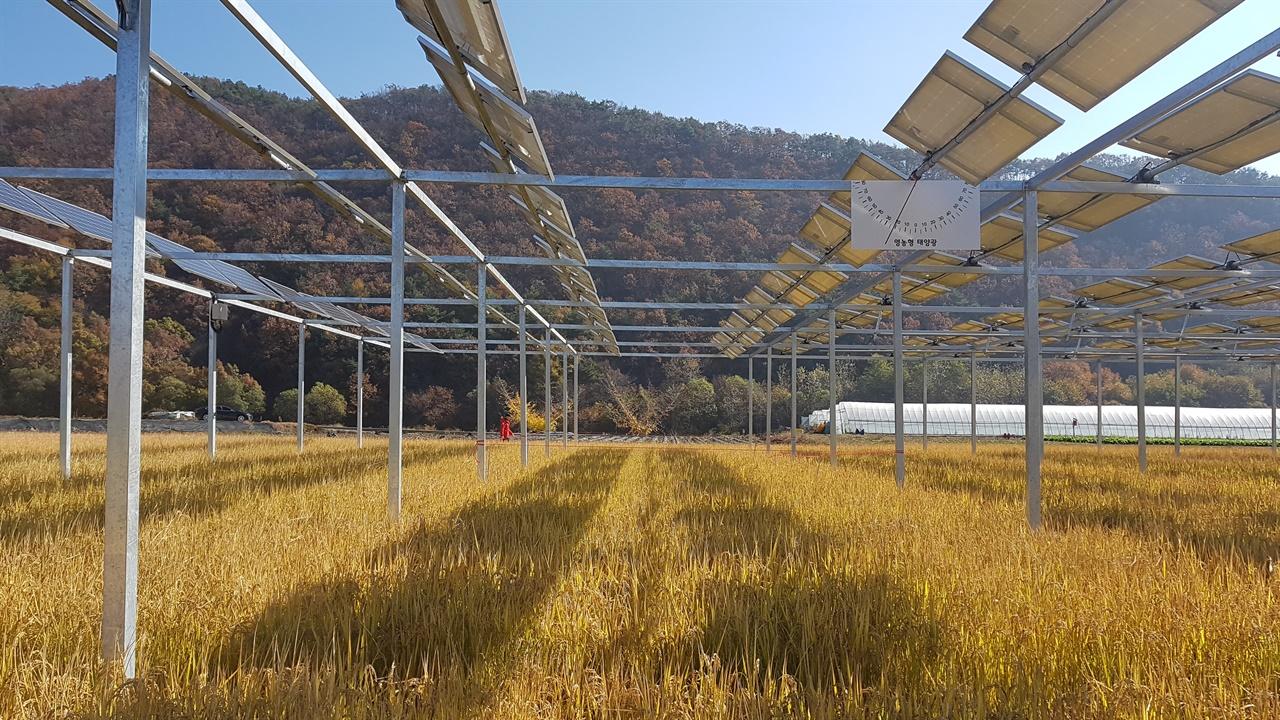영농형 태양광 시설 밑에서 바라본 모습이다.