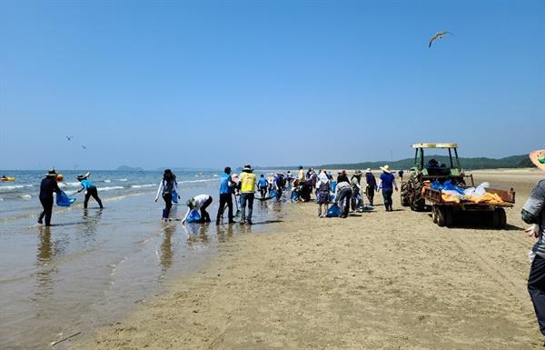 해변에 떠밀려온 죽은 전어 떼 수거하는 안면도 주민들 2톤 가량의 죽은 전어 떼가 해변에 몰려오자 안면도 주민과 공무원, 군인들까지 가세해 수거 작업을 펼치고 있다.