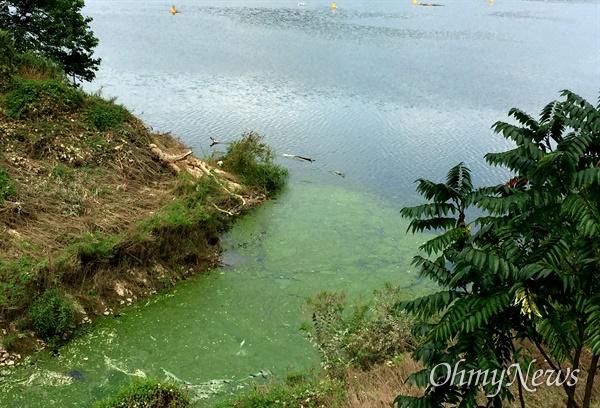 8월 22일 낙동강 합천창녕보에 발생한 녹조.