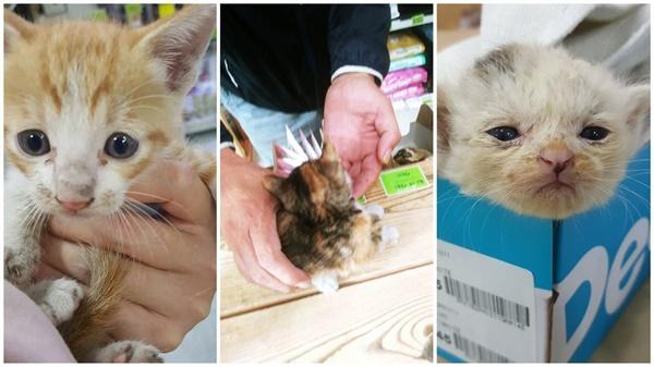 손님들이 구조해온 아기 고양이들
