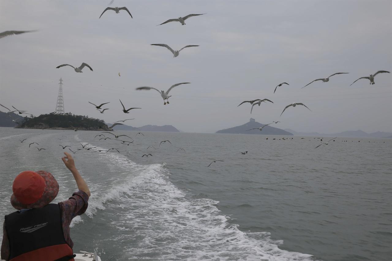 가사군도 투어 유람선을 따르는 갈매기들. 여행객이 갈매기에 새우깡을 던져주고 있다.