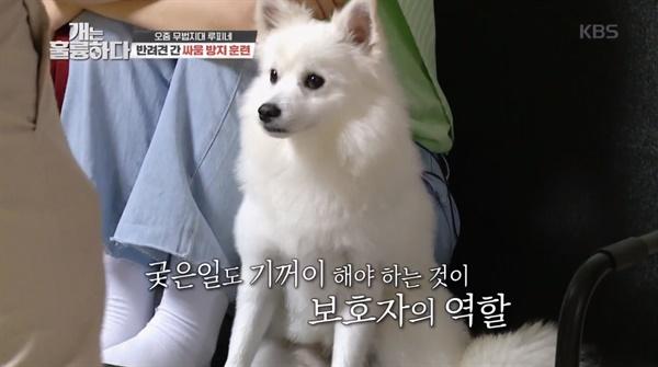 7일 방송된 KBS2 예능 <개는 훌륭하다>의 한 장면