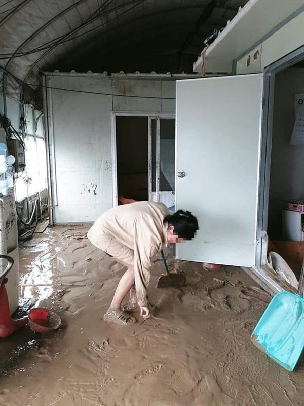 폭우 피해 이주노동자 기숙사  비닐하우스에 설치된 기숙사가 침수 피해를 입은 가운데 이주노동자가 복구 청소하고 있다.