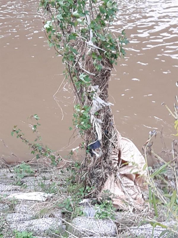 나무에 걸린 쓰레기 물가에 있는 나무는 여지없이 쓰레기가 걸려 있다. 그런데 내가 내려가서 줍다가 소방관 분들 고생시킬까 싶어 길에 있는 것만 줍는다.