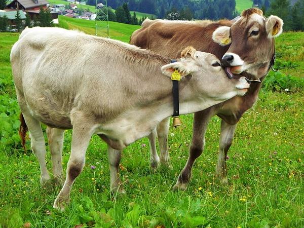 같은 면적에 채식작물을 재배했을 경우 가축 사료용 작물을 키웠을 때보다 최대 10배 가량 더 많은 사람들을 먹여 살린다는 주장도 있다.