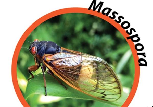 매소스포라라는 곰팡이에 감염된 17년 주기 매미 몸통의 아래쪽 절반이 곰팡이에 의해 사라져버린채 살아 있는 17년 주기 매미