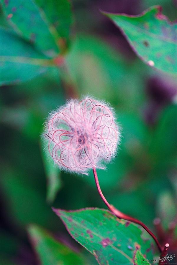 이름모를 식물 (Ektar100)보드라운 솜털 안에 여러 굴곡을 품고있는 동그란 모양을 만났다.