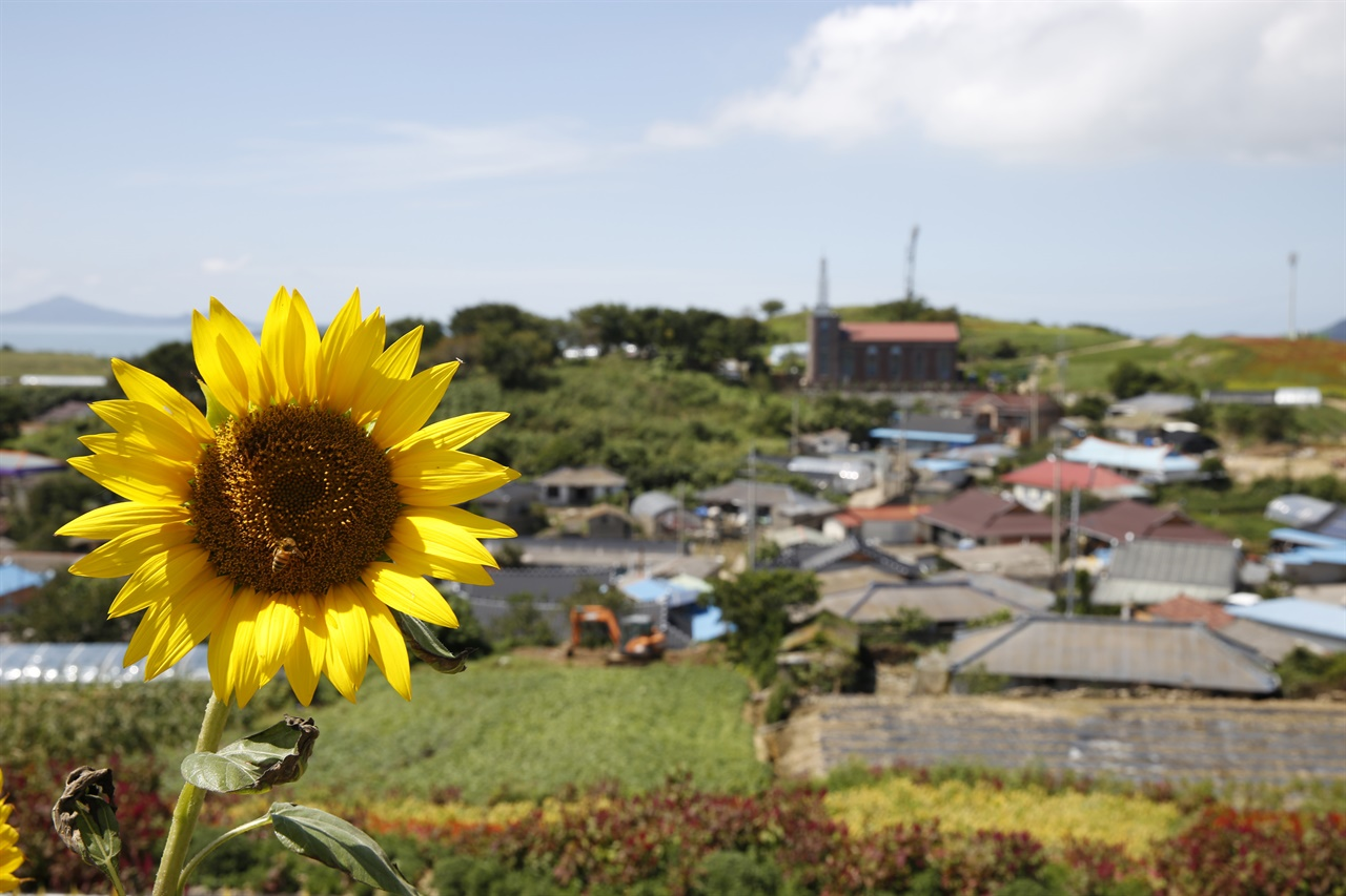 맨드라미 꽃동산에 핀 해바라기 뒤로 보이는 병풍도의 마을 전경. 맨드라미를 심기 전까지는 아주 평범한, 전형적인 섬 마을이었다.