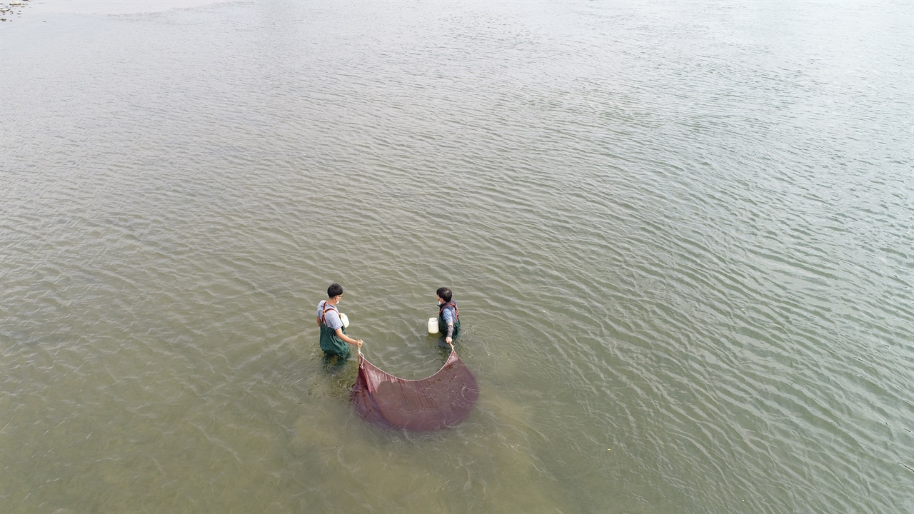 충남 공주시 우성면 옥성리 유구천 하류 200m 지점에서 족대를 물고기를 채집하고 있다.