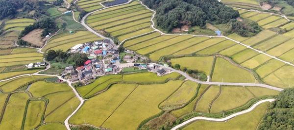 9월 21일 거창군 신원면 중유리 신촌마을 앞 들녘.