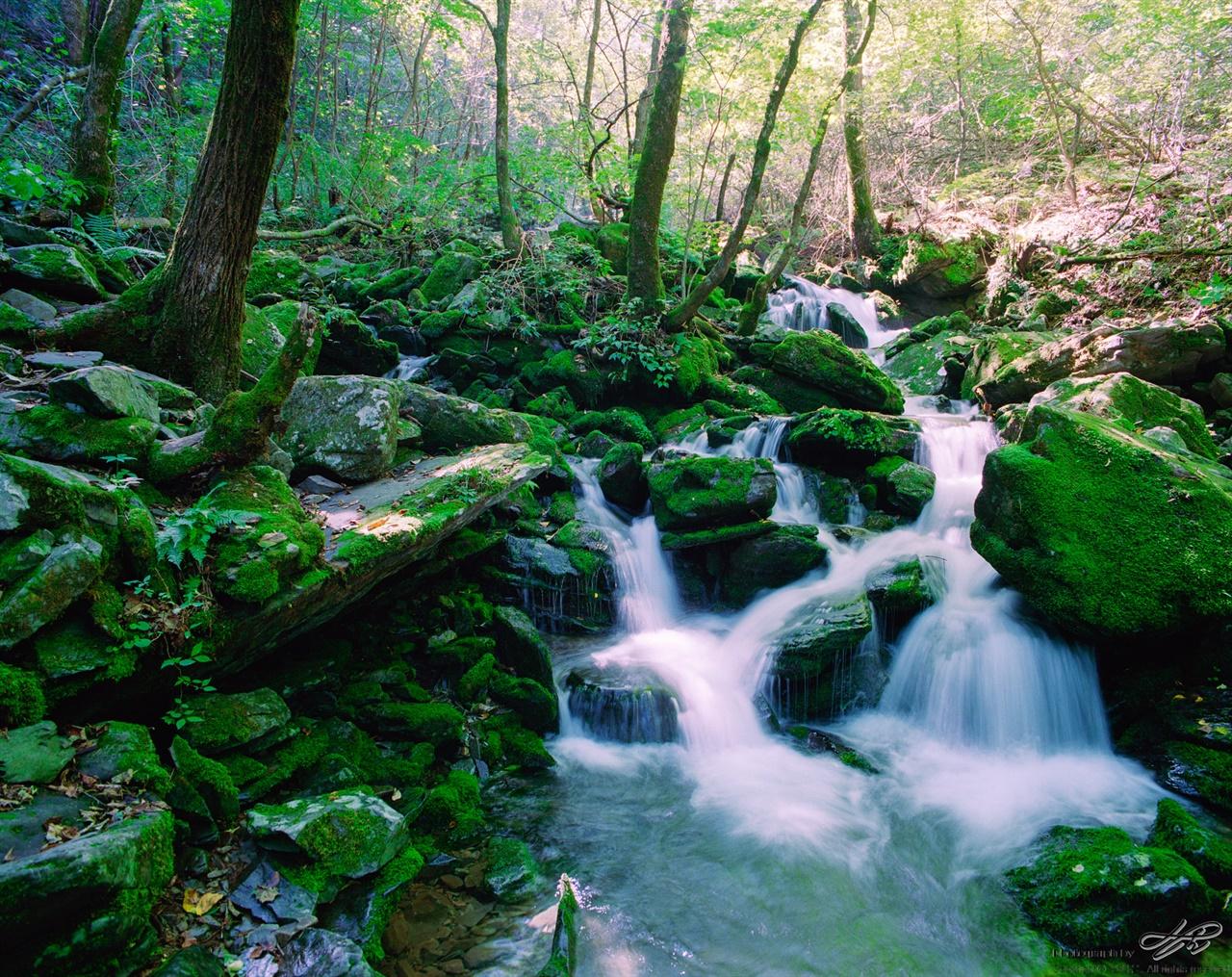 장전계곡 (Portra400)녹색 이끼 사이로 얼음장처럼 차가운 물이 흐른다.