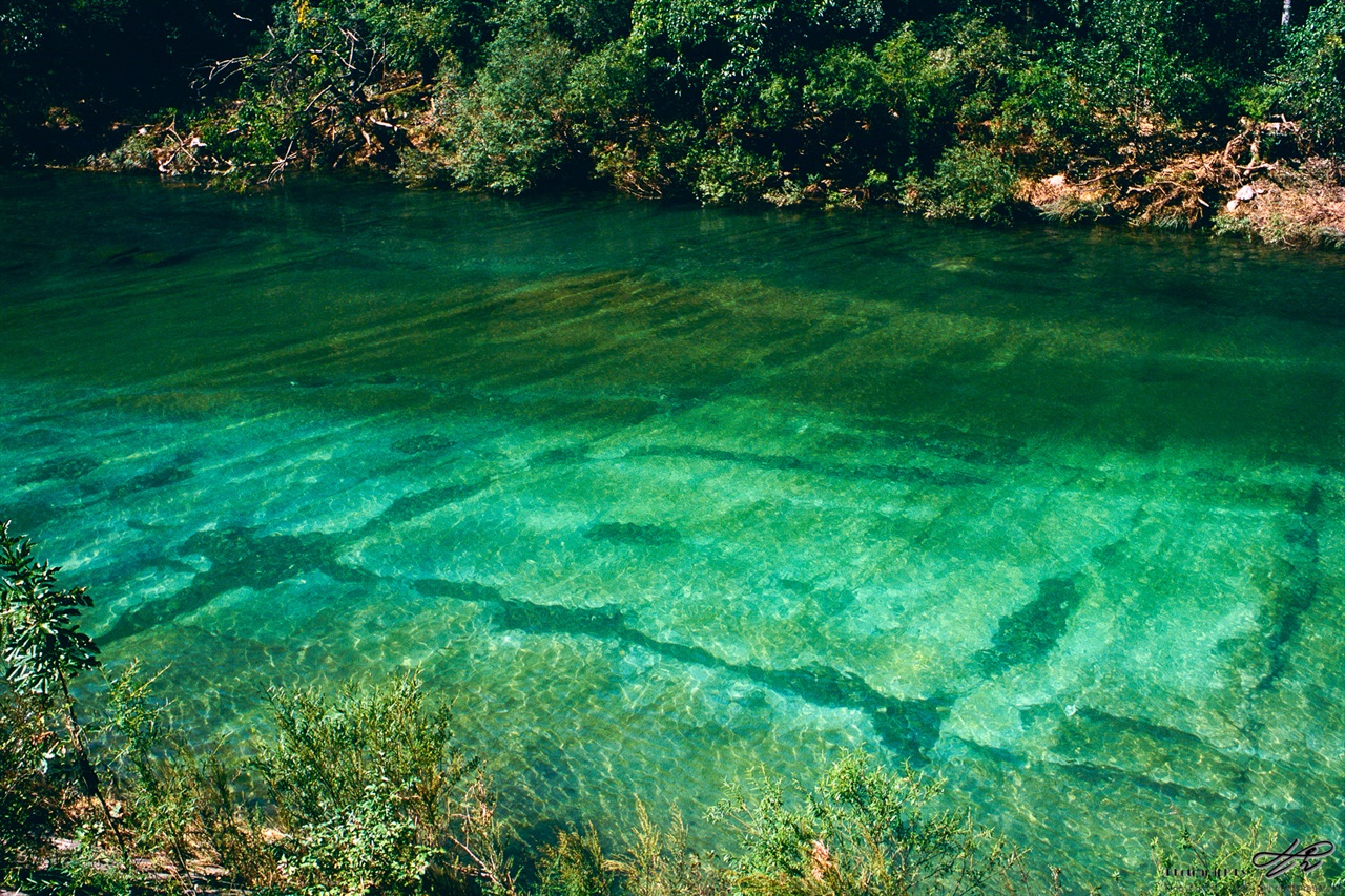 환상적인 물빛 (RDP3)이런 물빛이야 산 속 계곡에서는 흔하지만 마을을 지나는 실개천에서는 대단히 드문 빛깔이다.