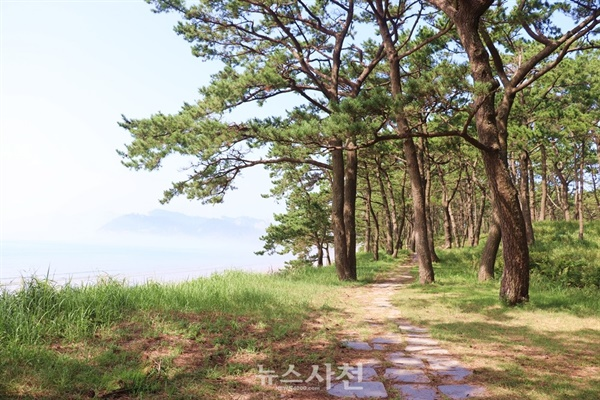 관매도해수욕장 뒤편으로 울창하게 뻗은 소나무숲이 펼쳐졌다. 선선한 바닷바람을 맞으니 저절로 '힐링(Healing, 치유)'됐다.