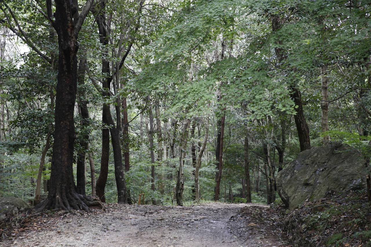 부도밭에서 미황사로 이어지는 숲길. 달마고도는 바위산이 품은 숲길이지만, 편안하게 걸을 수 있다.