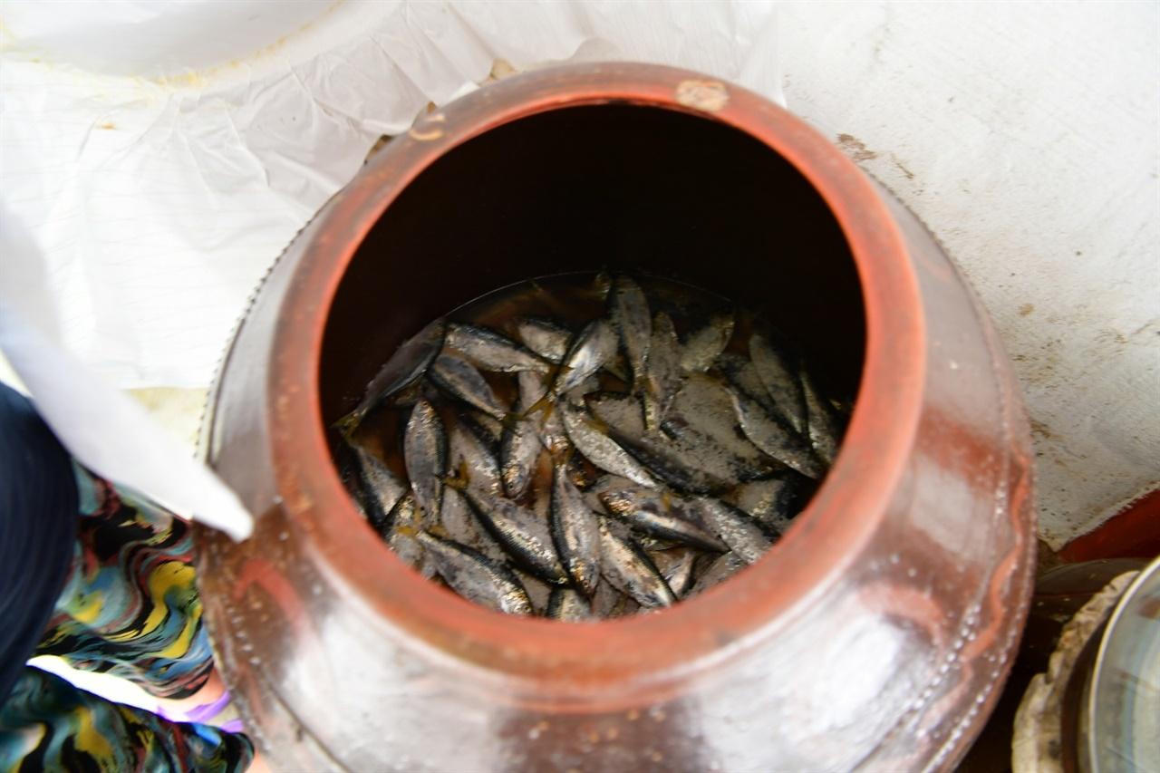 항아리에 담은 갇잡은 전어젖갈 모습