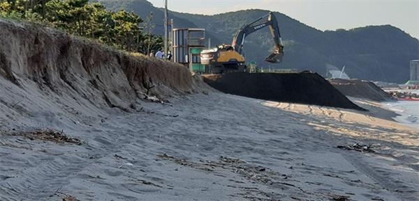 강원 삼척 맹방리해변. 소나무까지 위협하는 침식현상이 일어나고 있다.