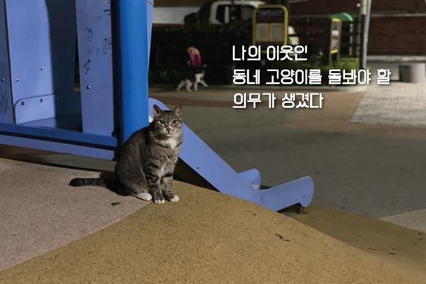 동네에서 만난 고양이의 모습