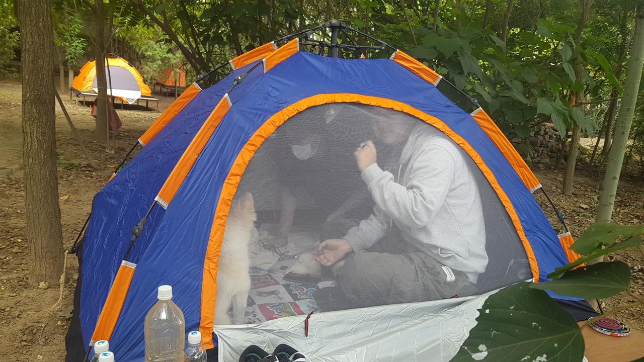 텐트 체험을 하고 있는 시민의 모습 자연속에 마련된 텐트 속에서 애완견과 함께 즐거운 시간을 보내고 있는 신지연. 신영웅씨의 모습이다.