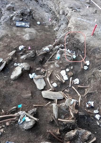 불과 지표면에서 30-40cm(붉은 원안)아래에서 유해가 드러났다.