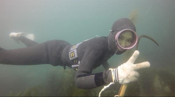 채취할 해산물을 탐색하는 장면 손에 든 기구는 호멩이라는 채취도구이다. 바위에 붙은 전복도 이 호멩이로 다 채취가 가능할 정도로 해녀들의 필수 도구이다.