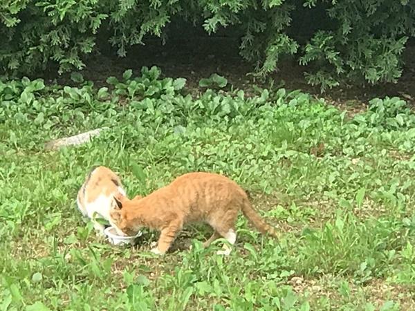 아기 고양이 찌개와 나무 배가 많이 고팠는지 사람에 대한 경계심도 없이 허겁지겁 먹기 시작했다.