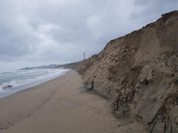망가진 맹방해변의 모습 해안가를 따라 흐르는 난류가 방파제 등의 공사로 인하여 바닥의 모래가 올라와 파도에 의하여 휩쓸려 내가가 버려서 생긴 3m의 절벽이 되어 있는 행단의 모습이 흉칙스럽다.
