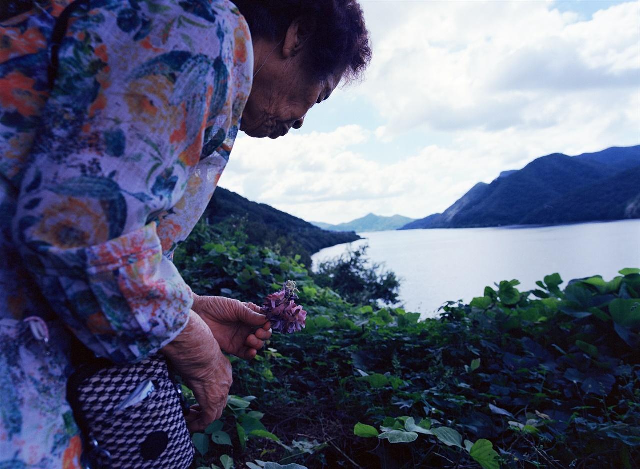칡꽃과 할머니 (645N/Portra400) 보령호 옆으로 칡꽃이 만발해 있었고 할머니는 말 없이 바닥의 꽃을 주워 모으셨다.