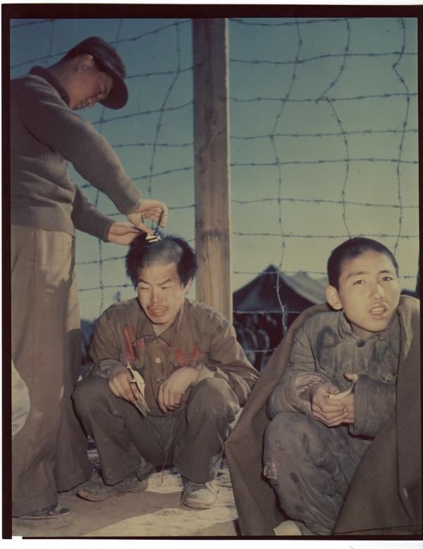 1951. 1. 19.  부산포로수용소에서 기간 병이 포로들의 머리를 바리깡으로 깎아주고 있다.