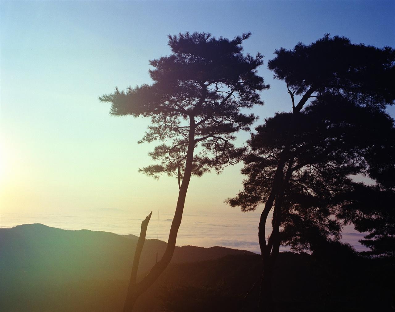 능선, 운해, 나무 (67ii/Portra400) 사광의 강렬함을 표현하기 위해 후드를 빼고 플레어를 그대로 받아들였다.